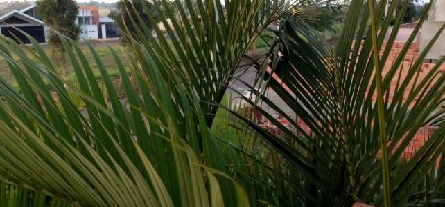 Blick vom Balkon über das Feld in Itapetininga