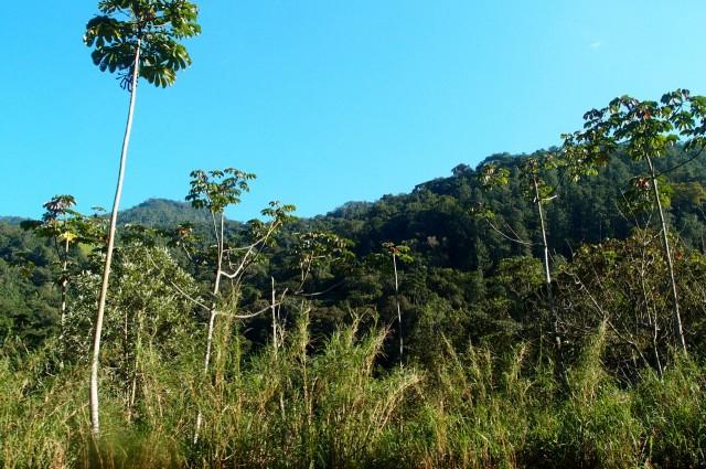Wald in Brasilien neben der Straße