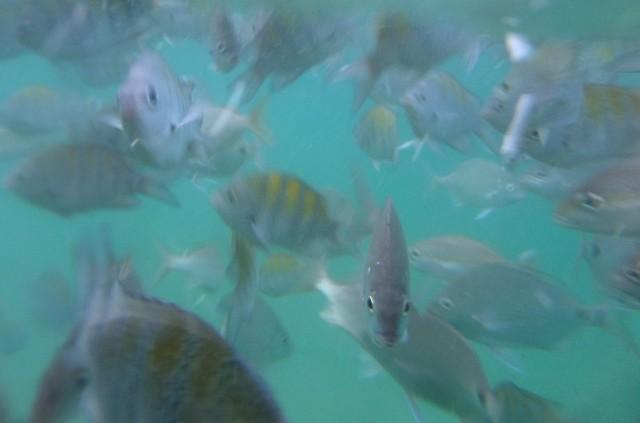 Fische in der Lagoa Verde
