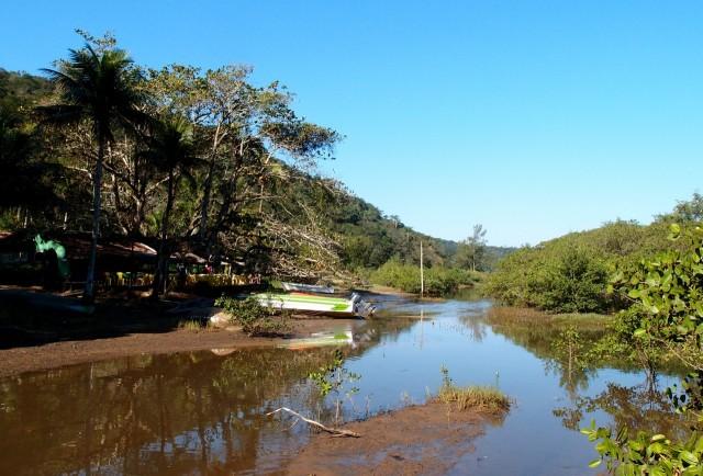 Mangroven auf der Ilha Grande