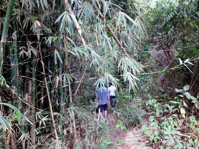 Dschungel am Rio Tietê