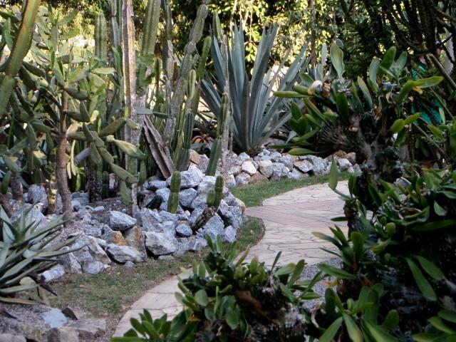 Kakteen, Jardim Botânico