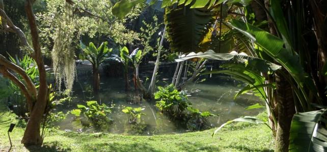 #14 – Must-See in Rio: Jardim Botânico