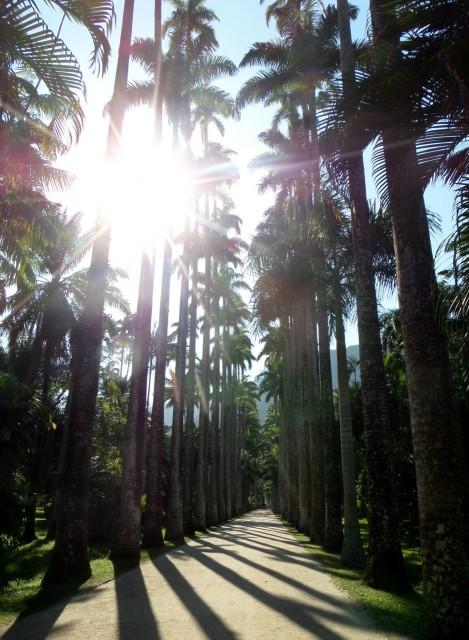 Palmen, Jardim Botânico