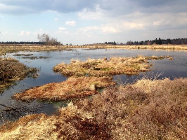 Teich Hohes Venn