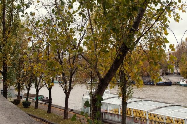 Seine, Paris im Herbst